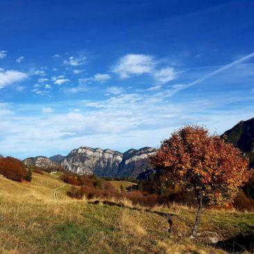 Api Ledrensi & Judicaria – riserva della biosfera